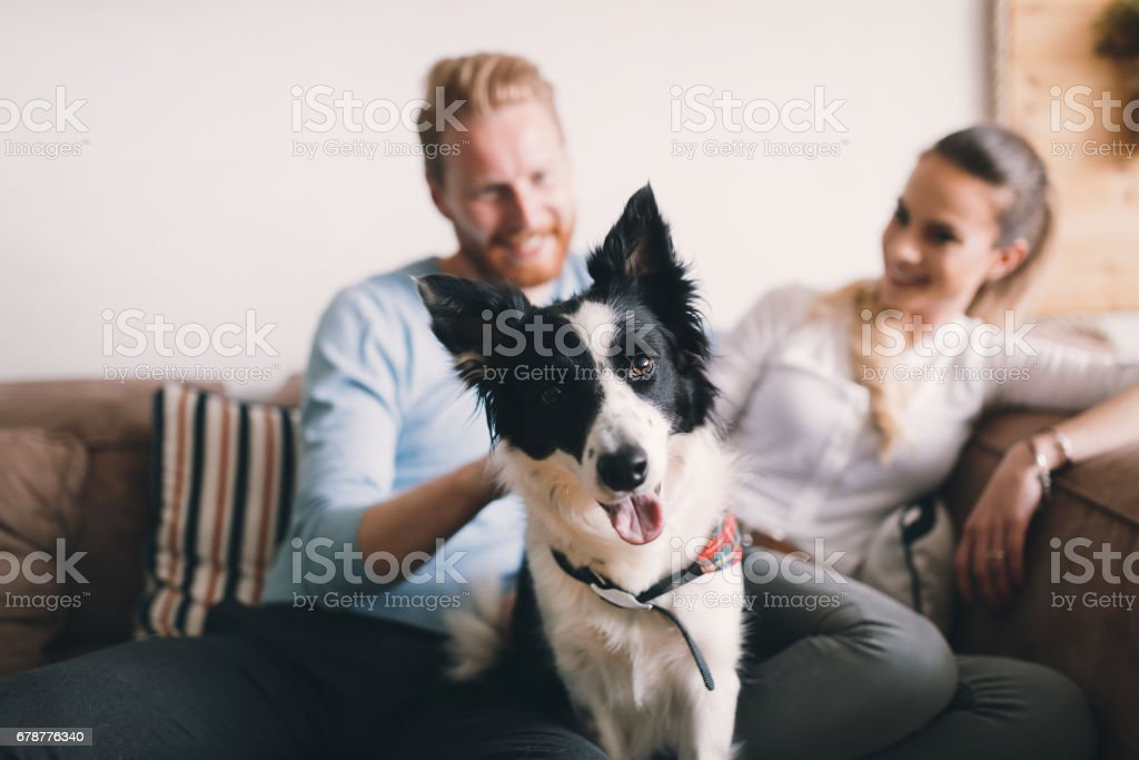 Beautiful couple relaxing at home and loving their pet stock photo