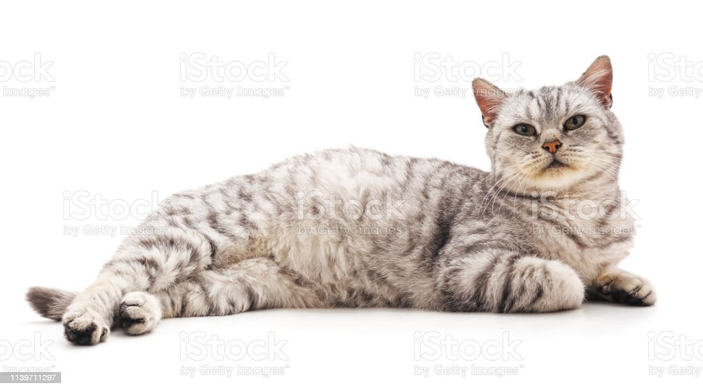 Beautiful Cute Cat Stock Photo Download Image Now Istock
