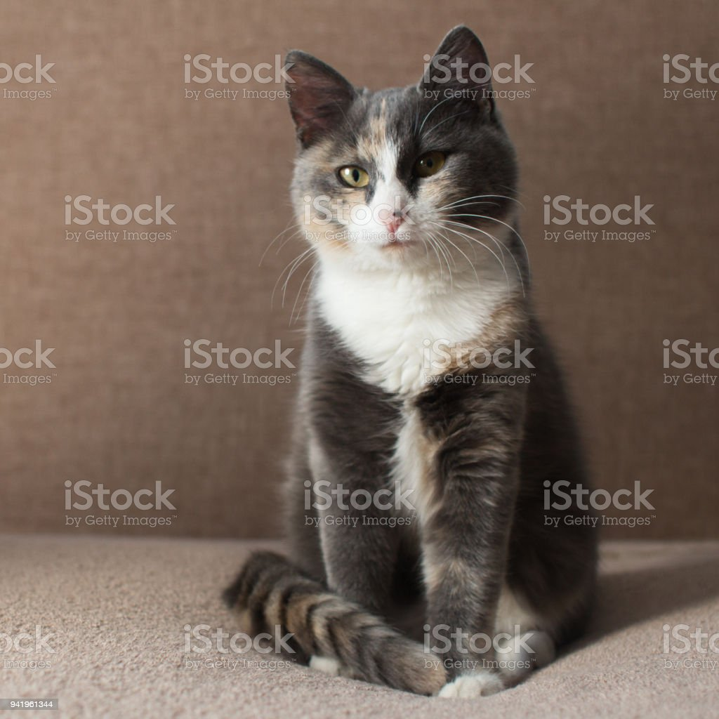 beautiful cute kitten sitting on a blanket on the bed, a happy pet