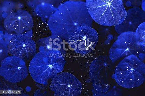istock Beautiful dark background of nasturtium leaves in blue. 1177717309