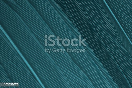 istock Beautiful dark green turquoise color trends feather texture background 1153336073