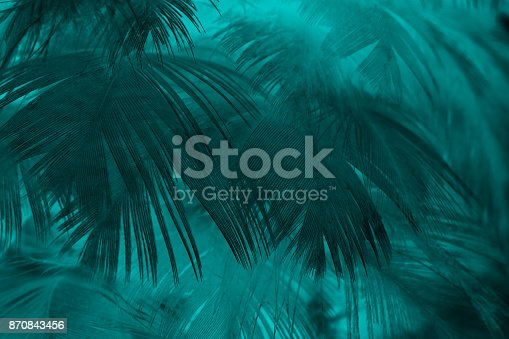 istock Beautiful dark green turquoise vintage color trends feather texture background 870843456