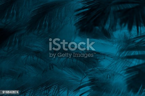istock Beautiful dark green turquoise vintage color trends feather texture background 916840874
