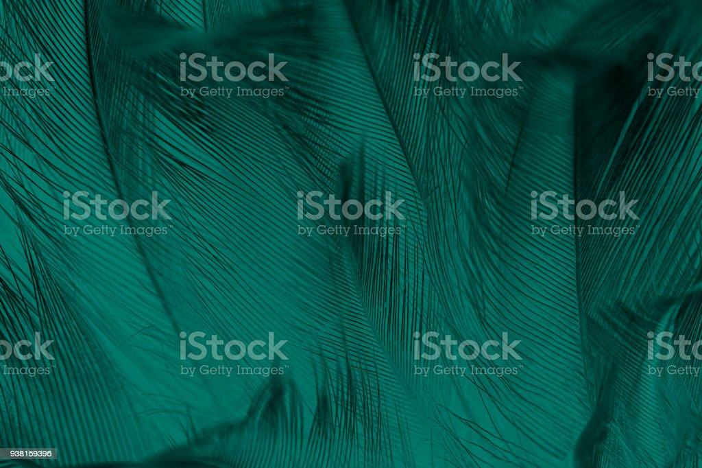 Beautiful dark green vintage color trends feather texture background royalty-free stock photo