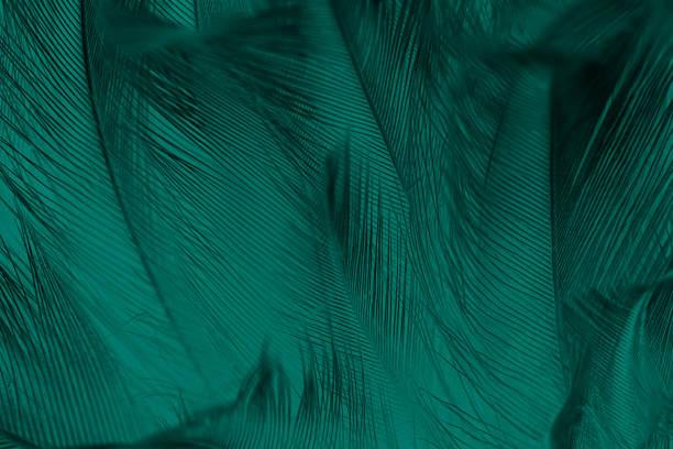 beautiful dark green vintage color trends feather texture background - piume colorate foto e immagini stock