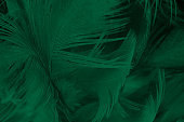 Beautiful dark green viridian vintage color trends feather texture background