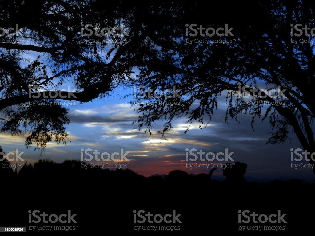 Beautiful dark silhouette at sunset royalty-free stock photo