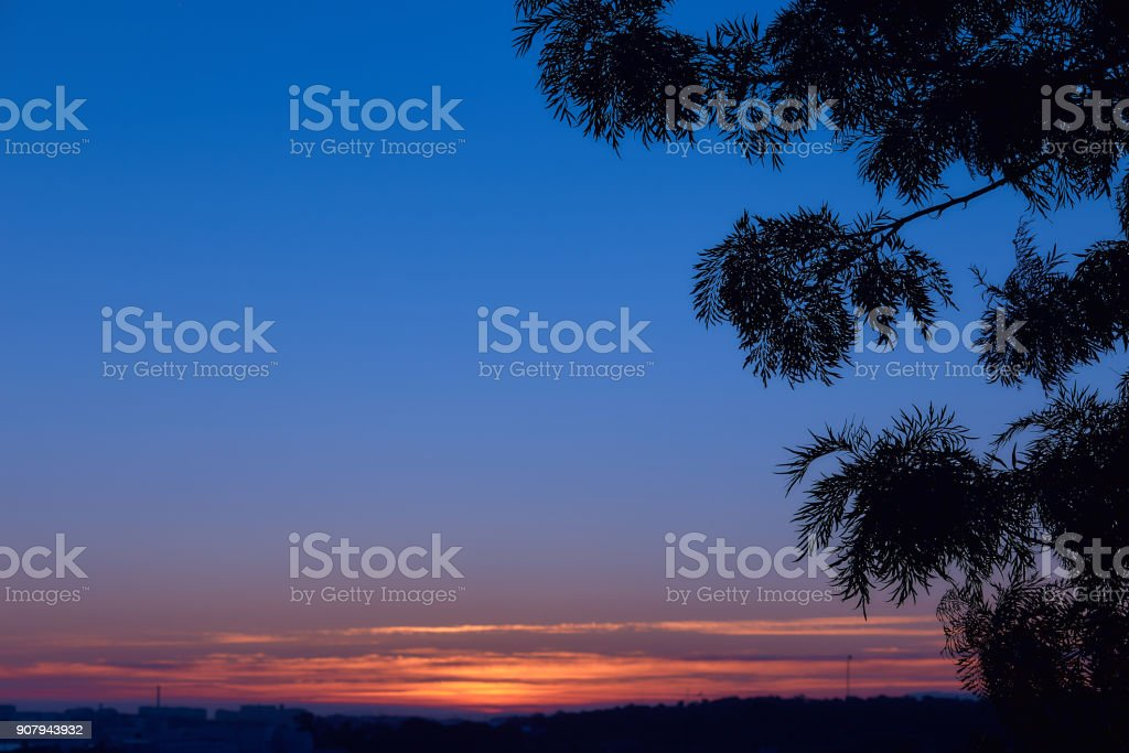 Beautiful dawn with silhouette of a branch of an exotic tree. The first rays of the sun appear in the sky. Silhouette of a branch of a tree with a free space for lettering or inscription. stock photo