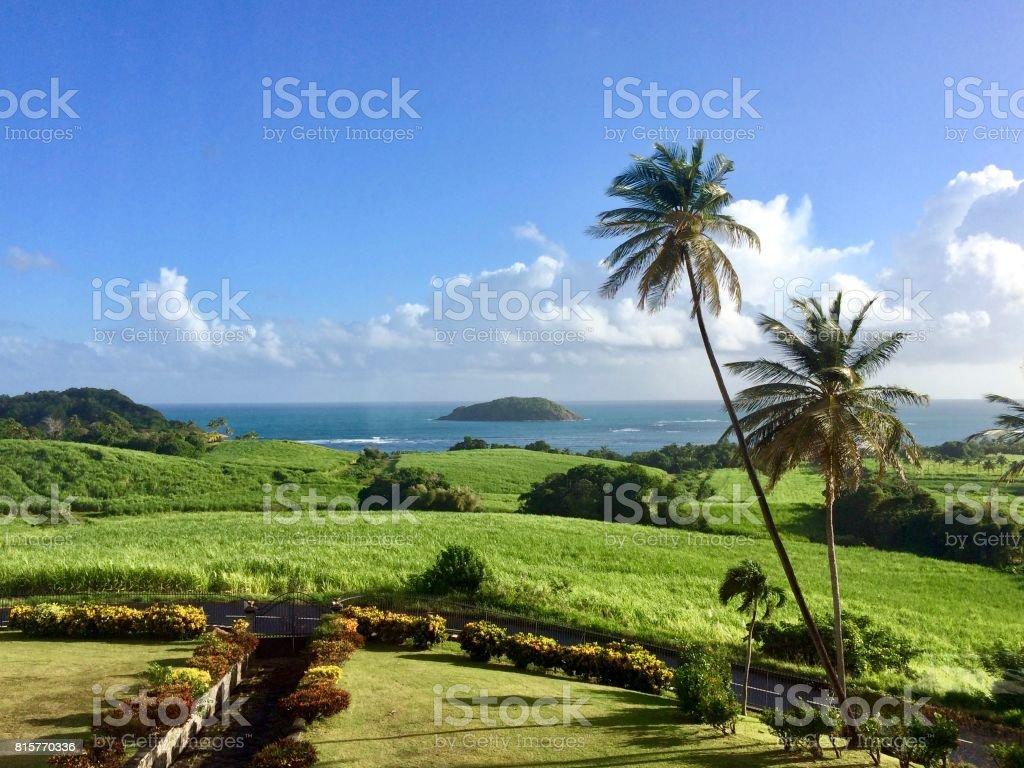 Belle journée à Sainte-Marie sur l'île des Caraïbes de la Martinique: pelouse d'herbe verte, coconut palmiers, soleil, ciel bleu avec des nuages blancs, océan en arrière-plan - Photo
