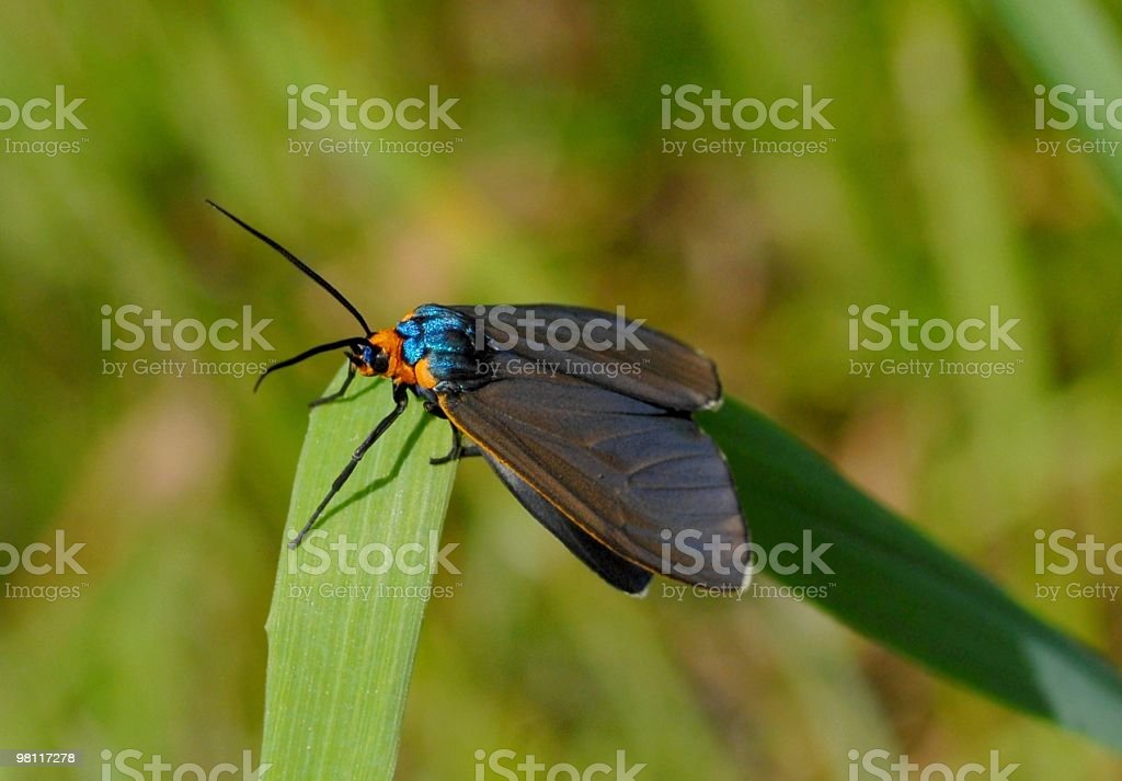 beautiful day moth royalty-free stock photo
