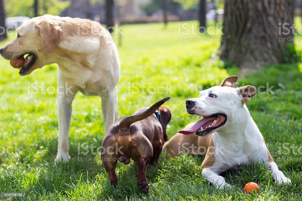 Beautiful day to play stock photo
