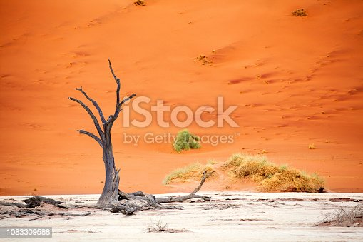 1083309578 istock photo Beautiful dead dried tree on orange sand dune background, Naukluft National Park Namib Desert, Namibia, Southern Africa 1083309588