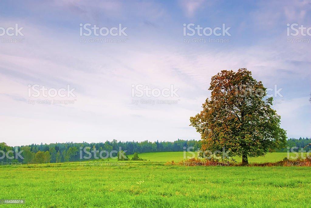 Magnifique Arbre à feuilles caduques dans un champ sur fond de ciel nuageux - Photo
