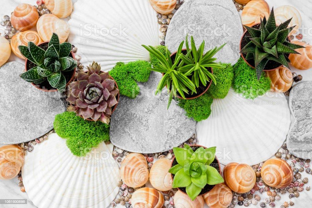 Schone Dekoration Mit Sukkulenten Pflanzen Moos Und Muscheln