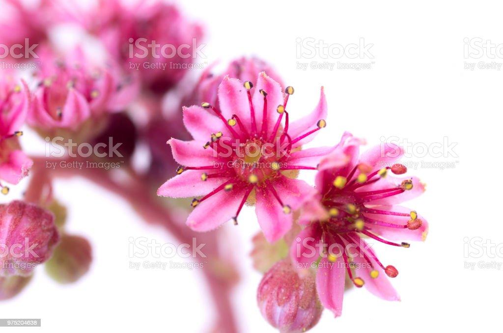 A beautiful decorative plant. Decorative flower. Isolate