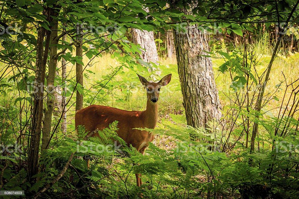 Beautiful deer. stock photo