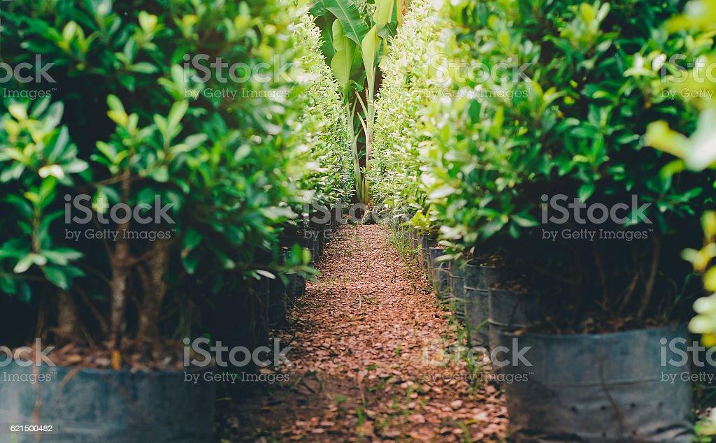 beautiful defocus path in green garden photo libre de droits