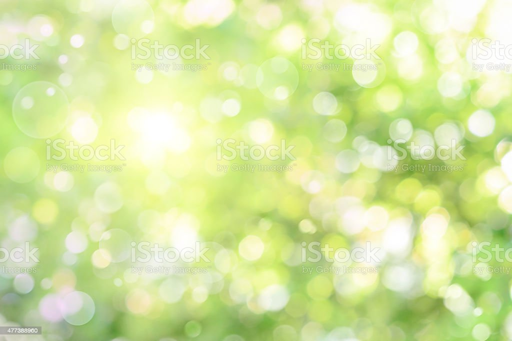 Beautiful defocused highlights in foliage stock photo