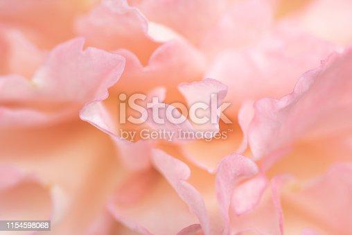 istock Beautiful delicate rose flower petals close up. 1154598068