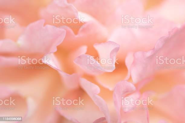 Beautiful delicate rose flower petals close up picture id1154598068?b=1&k=6&m=1154598068&s=612x612&h=7sxizgipj vydtzx7cbcia327drq6gzce hgzydklnm=