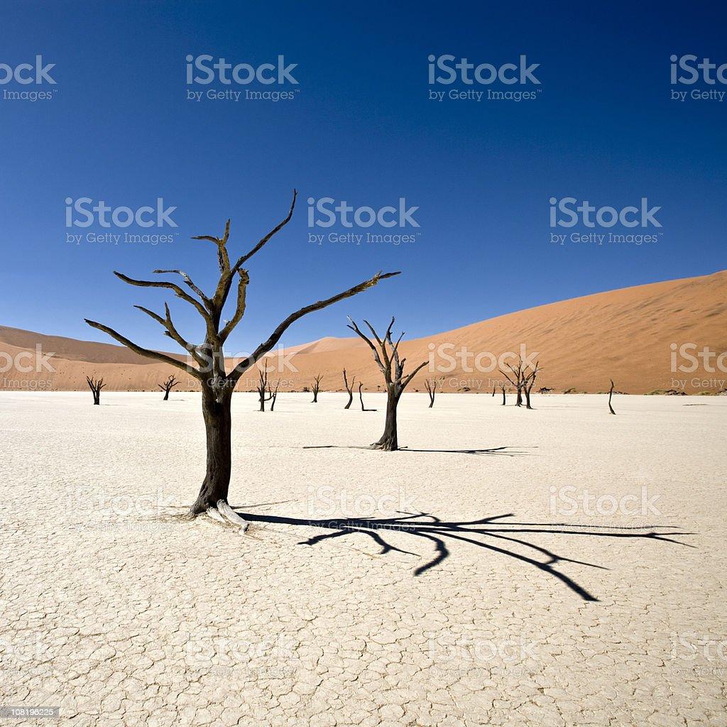 Beautiful Desert Dead Vlei royalty-free stock photo