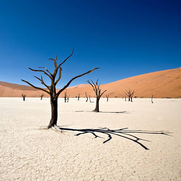 schöne wüste dead vlei - namib wüste stock-fotos und bilder