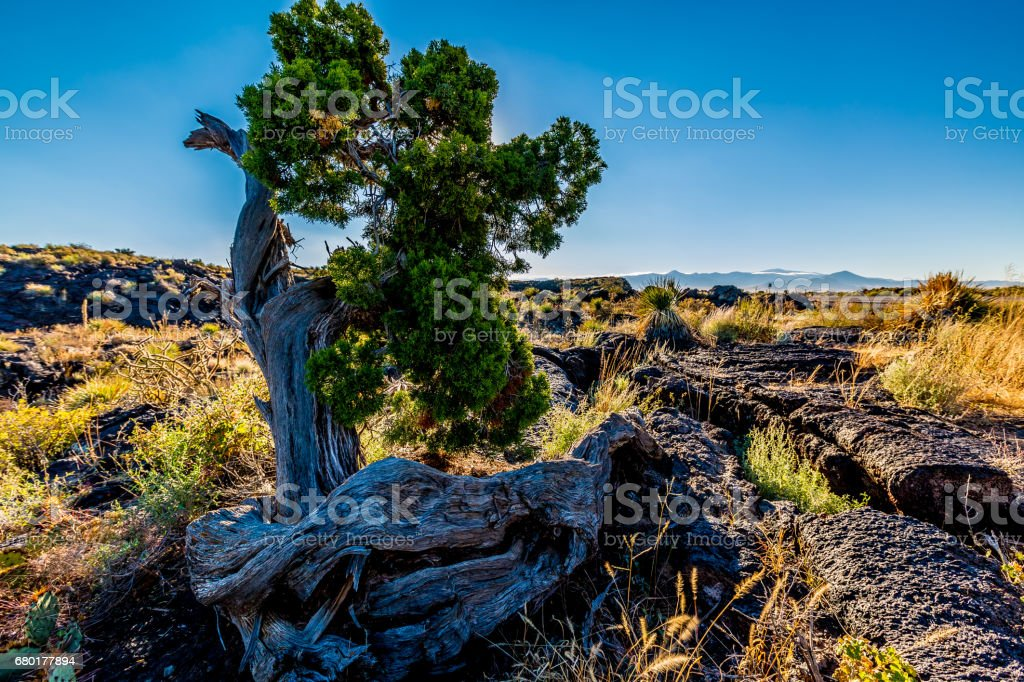 Beautiful Desert Landscape in the Valley of Fires Area in New Mexico. stock photo