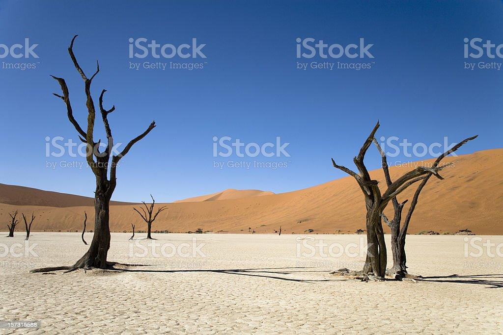 Belas árvores no deserto - foto de acervo
