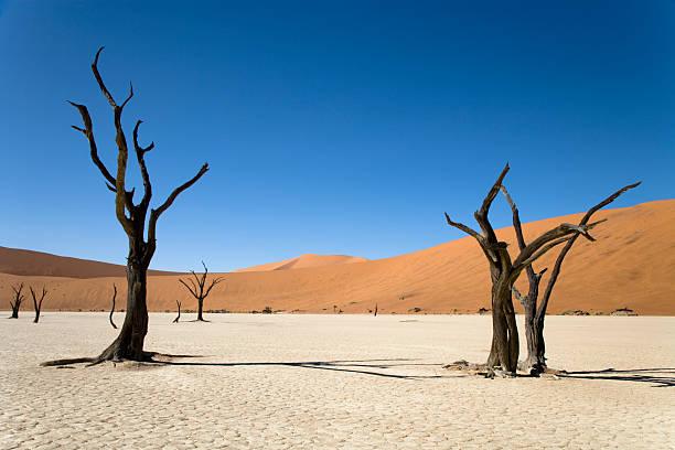 schöne wüste bäumen - namib wüste stock-fotos und bilder