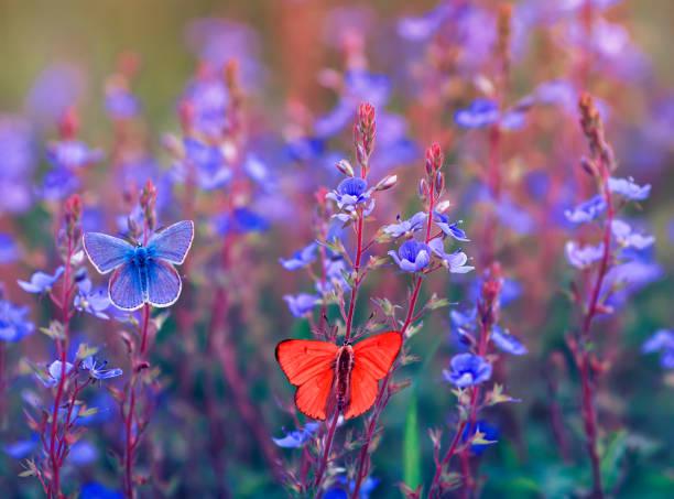 Beautiful different butterfly polyommatus icarus are sitting and in picture id1137357044?b=1&k=6&m=1137357044&s=612x612&w=0&h=kd5ktow095r7nmypdcoi4jfdzdoazgkhriv5lshsdta=