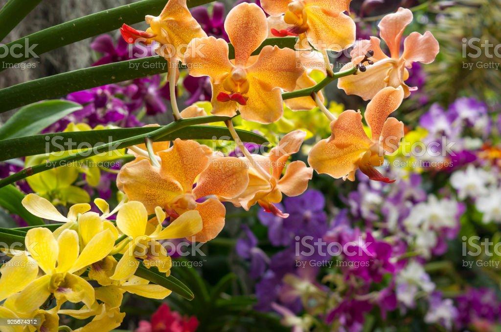 Fotografía de Hermosa Diferentes Tipos De Flores Orquídeas y más ...