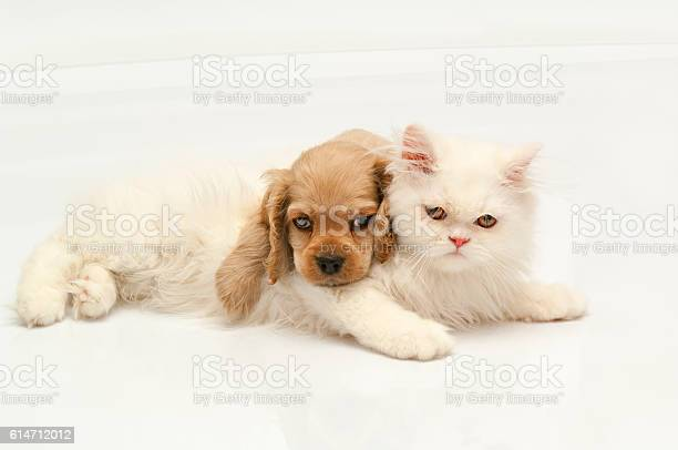 Beautiful dog and cat on white picture id614712012?b=1&k=6&m=614712012&s=612x612&h=t3bnsjxwezxraefbuzvddfas w2sipuua unyzw70us=