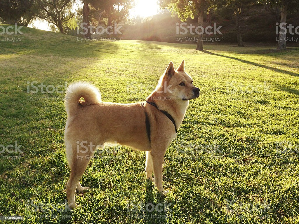 Beautiful dog in park royalty-free stock photo