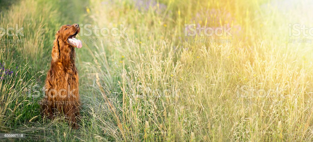 Beautiful dog in summer stock photo