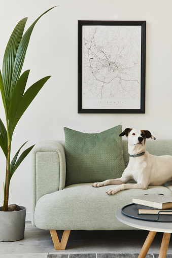 Beautiful dog lying on the green sofa at stylish loft interior with green sofa, design furniture, mock up poster map, carpet, plants and decoration. Template.