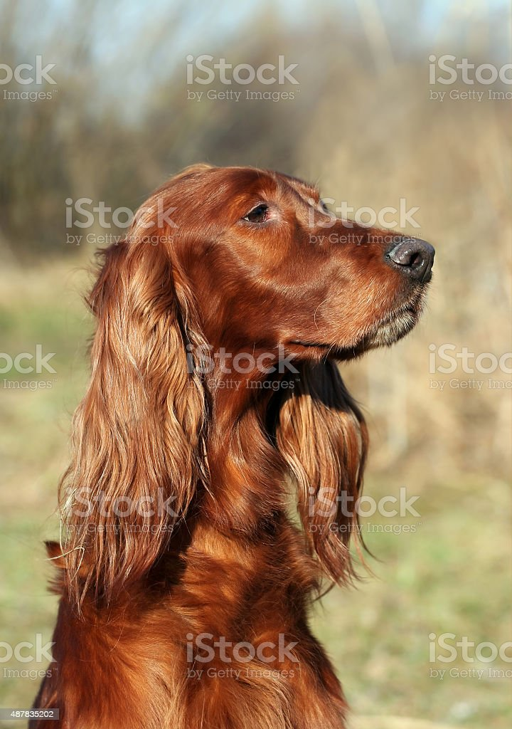 Beautiful dog stock photo