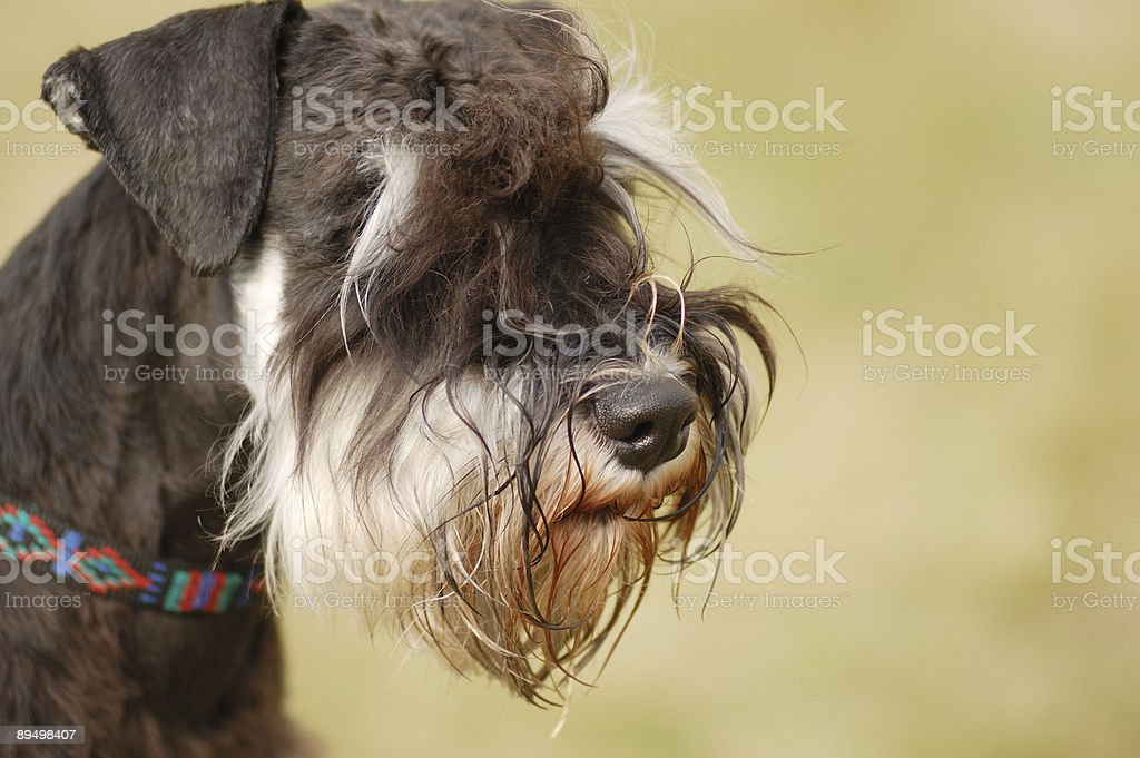 Bellissimo cane foto stock royalty-free