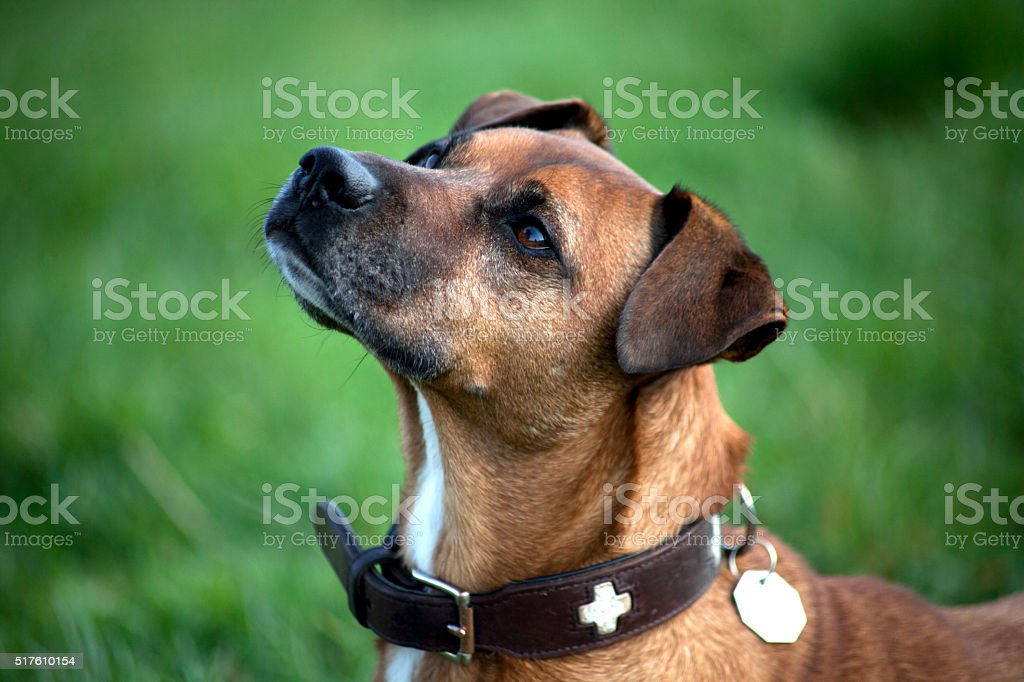Beautiful Dog Portrait stock photo