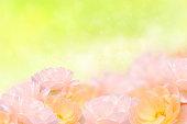 istock Beautiful Dog rose flower on blur background. 497948805
