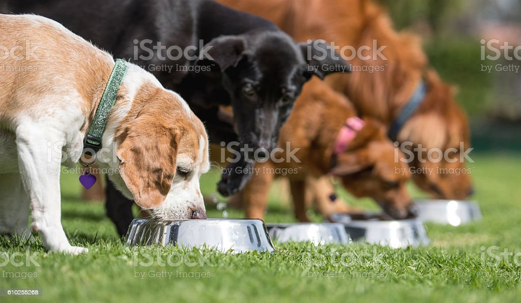 Beautiful dogs eating stock photo