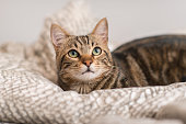 Beautiful domestic cat at home