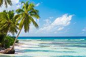 Beauty in nature on Isla Saona, Dominican Republic