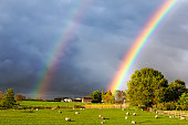 istock Beautiful double rainbow in sky over field of sheep with dramatic clouds 1223607047