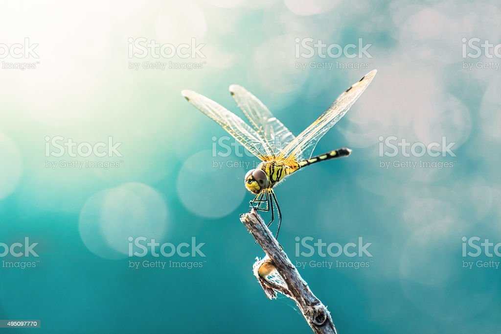 Beautiful dragonfly and blur bokeh background stock photo