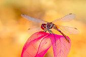 Beautiful dragonfly sitting on flower