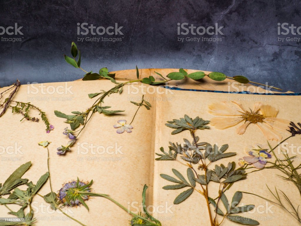 Composition with flowers and dry up plants on notebooks on table...
