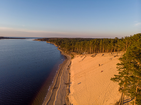 Beautiful drone areal photography view of large dune and pine forest near river Lielupe.