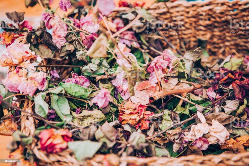 Flower, dry, Backgrounds, rose - flower
