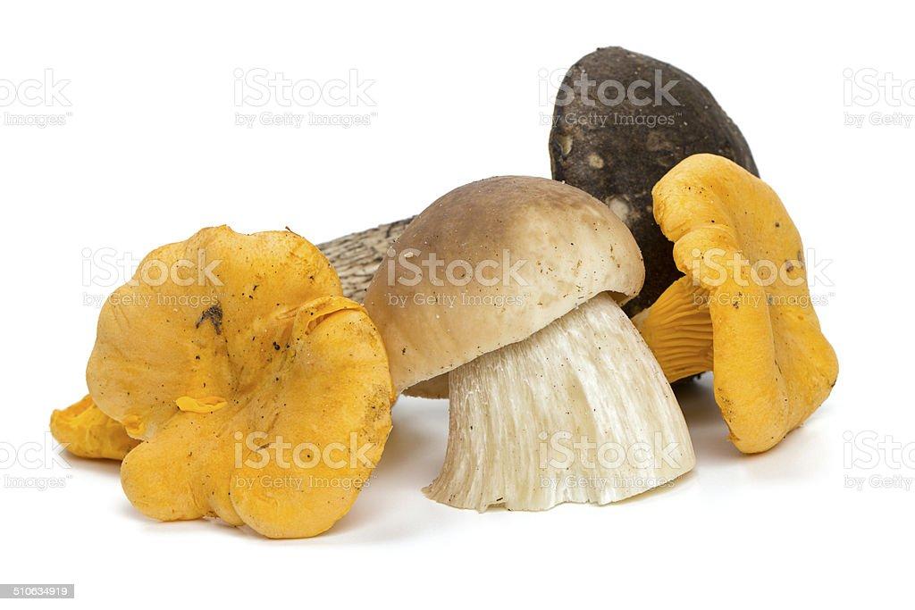 beautiful eadible mushrooms stock photo