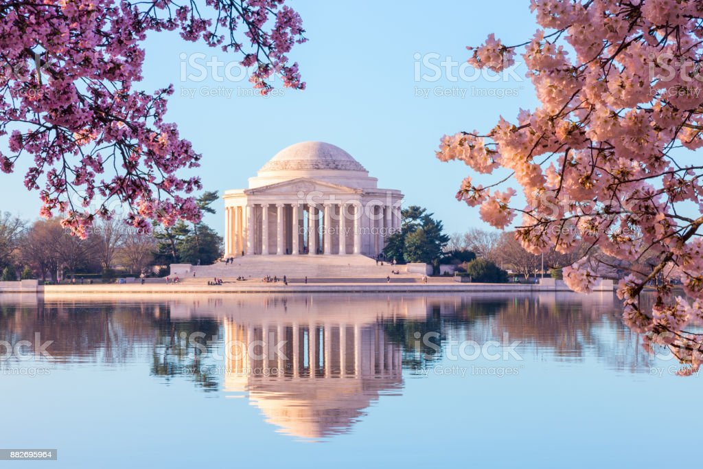 Beautiful early morning Jefferson Memorial with cherry blossoms Sun rising illuminates the Jefferson Memorial and Tidal Basin. The bright pink cherry blossoms frame the monument in Washington DC during the annual cherry blossom festival Annual Event Stock Photo